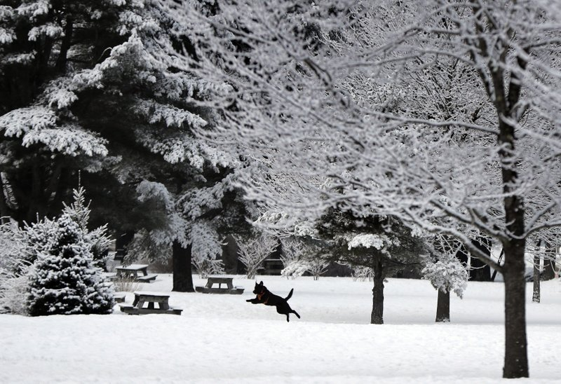 A dog frolics in the fresh snow during the waning days of winter in Freeport, Maine, on Thursday, March 14, 2019. (AP Photo/Robert F. Bukaty)