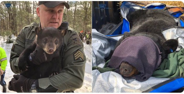 Moving day: Bear family living in highway median relocated