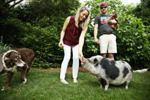 Sooey! Pig named Hamilton bringing Hurricanes playoff luck