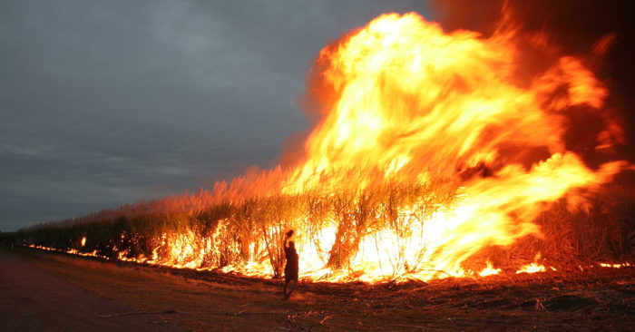 Archive image. Sugar cane field in Australia being intentionally burned to remove the weeds. (Rob and Stephanie Levy / Flickr)