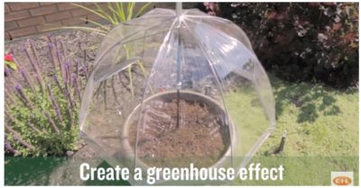 How to make one-dollar greenhouse from a plastic umbrella