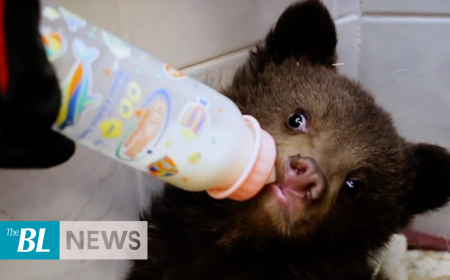 Rescued baby bears released into wild in Bulgaria